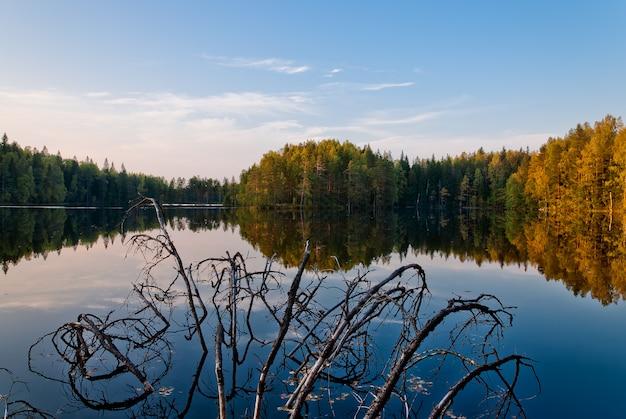Herbstlandschaft: ein wald am fluss