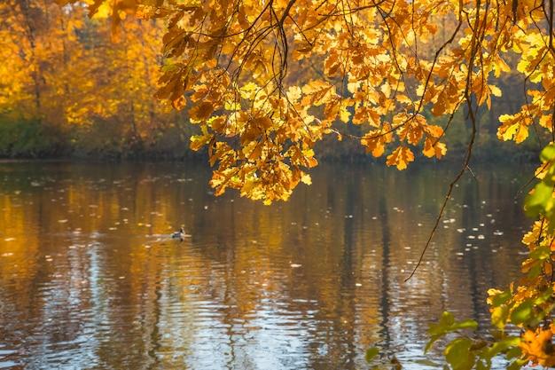 Herbstlandschaft. farben des herbstes im park, see. bunte blätter auf bäumen, morgen am fluss