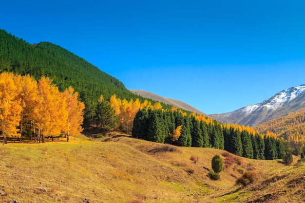 Herbstlandschaft. gelbe und grüne bäume. berge und strahlend blauer himmel.