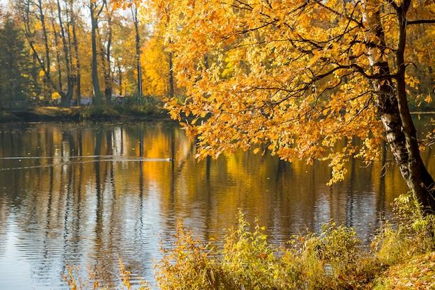 Herbstlandschaft. helle farben des herbstes im park am see. bunte blätter auf bäumen, fluss nach regnerischer nacht.