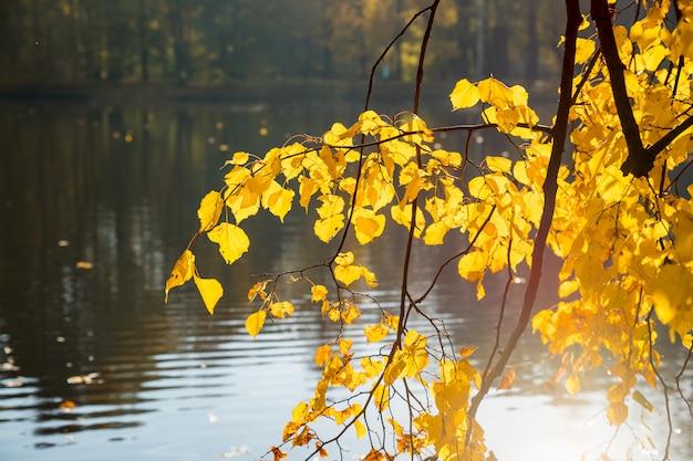 Herbstlandschaft. helle farben des herbstes im park am see. bunte blätter, fluss nach regnerischer nacht.
