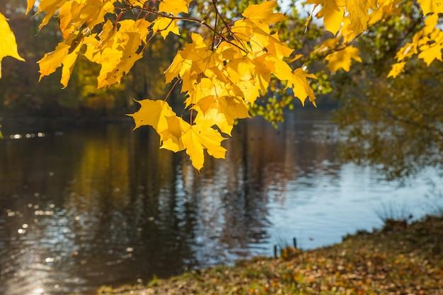 Herbstlandschaft. herbst im park am see. bunte blätter auf bäumen, morgen am fluss