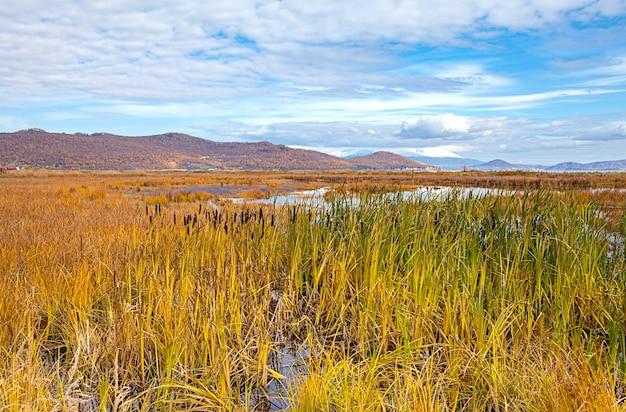 Herbstlandschaft im sumpf in kamtschatka