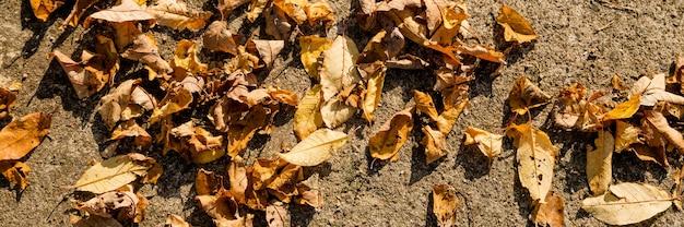 Herbstlandschaft in gelb, landstraße mit gefallenen trockenen blättern im herbstwald am sonnigen tag. trockene gelb-rote blätter auf der straße auf einem stein an einem sonnigen tag im herbst im oktober in einem naturpark