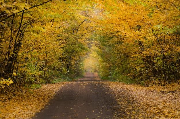Herbstlandschaft mit buntem herbstlaub von bäumen. bunte herbststraße im wald. straße durch den park im herbst