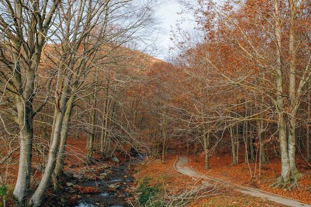 Herbstlandschaft mit einem bunten wald und einem orange laub, einem weg und einem fluss