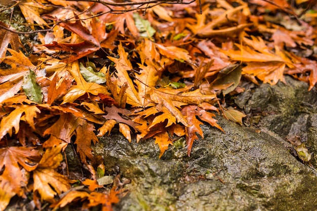 Herbstlandschaft mit einem wasserfall in troodos, zypern