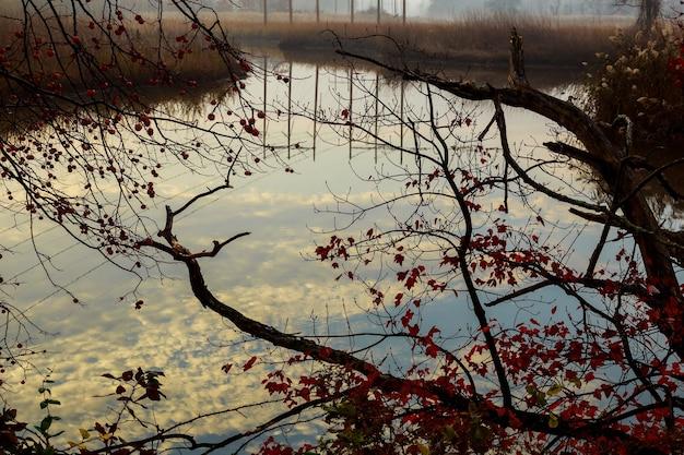 Herbstlandschaft mit flussnebel am sommermorgen