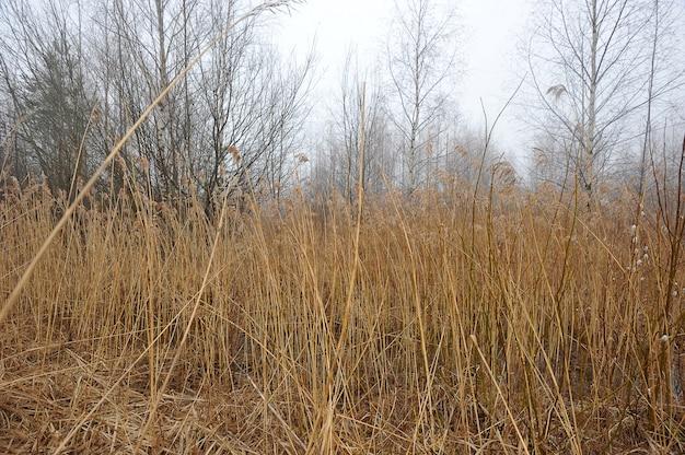 Herbstlandschaft mit gelbem stock und nebel