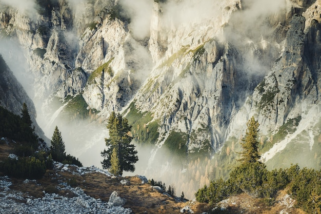 Herbstlandschaft mit immergrünen pelzbäumen in den dolomiten, erstaunliche felsige berge im tre cime di lavaredo park, italien