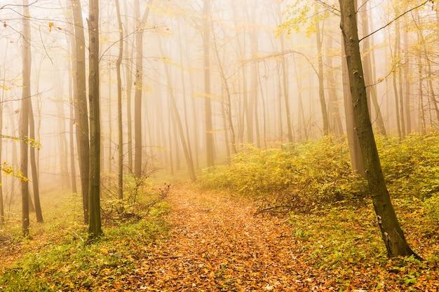 Herbstlandschaft mit mysteriösem nebeligem märchenwald.