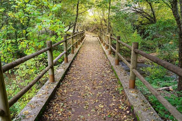 Herbstlandschaft mit weg zwischen bäumen und holzzaun. gefallene blätter auf dem boden. spanien.