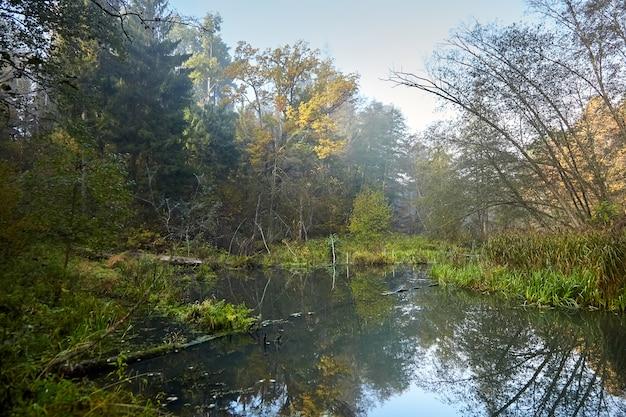 Herbstlandschaft - morgenwald mit gelbem laub und ruhigem sumpffluss