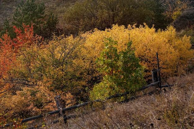 Herbstlandschaft schöne farbige bäume, die im sonnenlicht leuchten. wunderbarer malerischer hintergrund. schöne farben und eine friedliche atmosphäre. herrliche aussicht