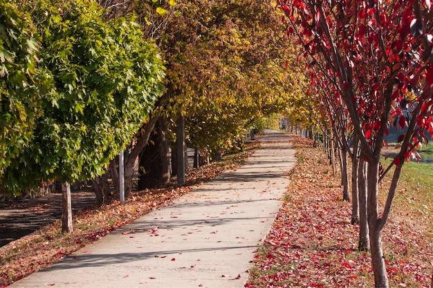 Herbstlandschaft schöne gasse in einem park mit bunten bäumen. hintergrund. mukachevo, ukraine