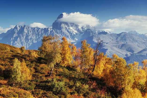 Herbstlandschaft und schneebedeckte berggipfel. blick auf die mou
