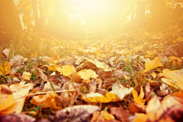 Herbstlandschaft.