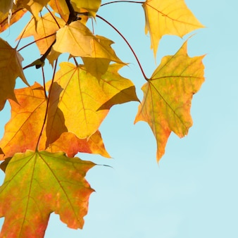 Herbstlaub als hintergrund. tiefenschärfe. herbst-konzept.