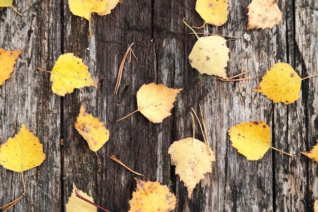 Herbstlaub auf baumstammhintergrund.