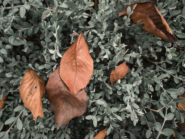 Herbstlaub auf busch im park