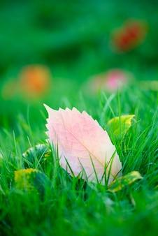 Herbstlaub auf dem boden im park