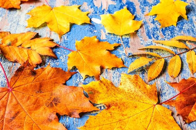 Herbstlaub auf dem hölzernen cyan-blauen schreibtisch des schmutzes