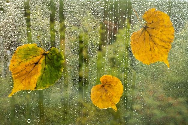 Herbstlaub auf der fensterscheibe