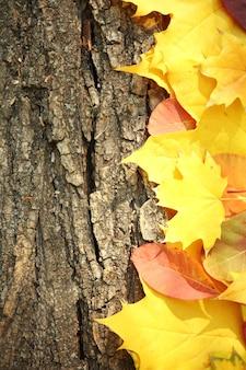 Herbstlaub auf der holzoberfläche