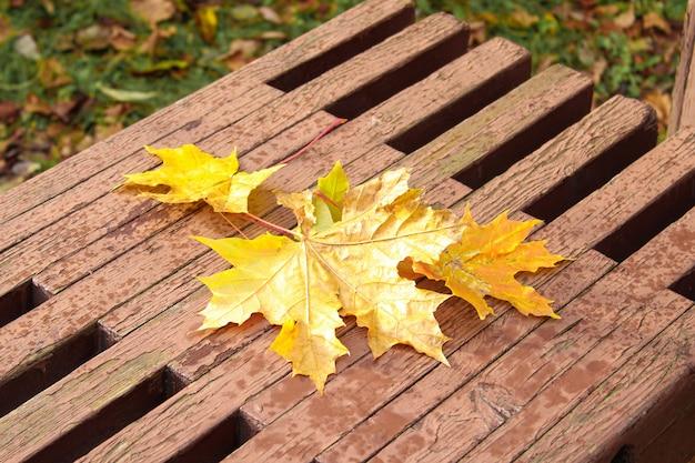 Herbstlaub auf einer bank.