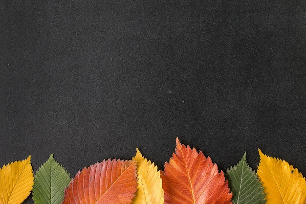 Herbstlaub auf einer tafel