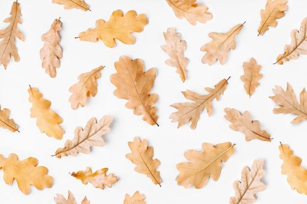 Herbstlaub auf weißem hintergrund. flache lage, ansicht von oben, kopienraum