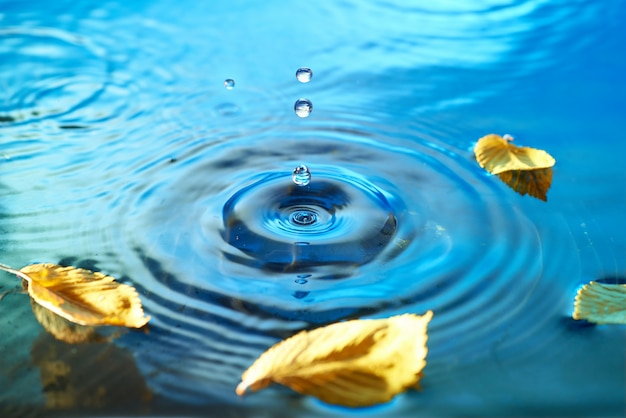 Herbstlaub auf welliger wasseroberfläche