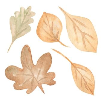 Herbstlaub eingestellt, lokalisiert auf weißem hintergrund.