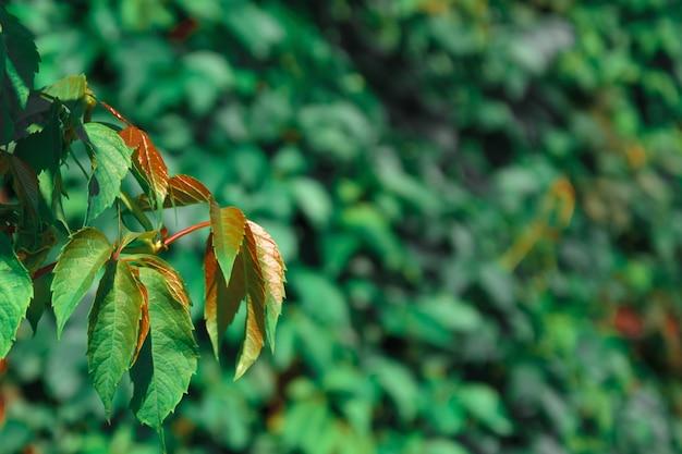 Herbstlaub hautnah