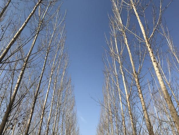 Herbstlaub, herbst, fallwald. natürlicher weg in richtung für hintergrund
