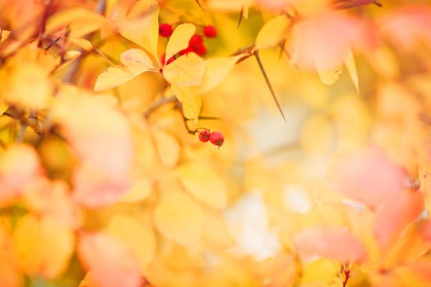 Herbstlaub hintergrund. selektiver fokus