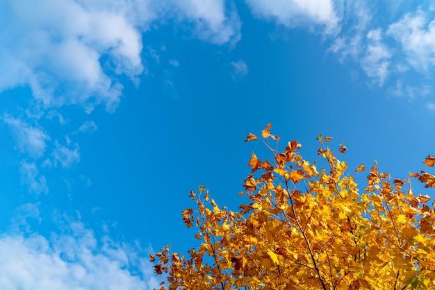 Herbstlaub mit dem blauen himmel, gelbes herbstlaub vor könnte himmel. leuchtend orange blätter in der herbstsaison leerzeichen.