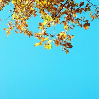 Herbstlaub mit dem blauen himmelhintergrund
