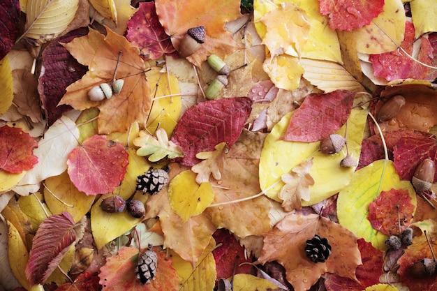 Herbstlaub mit wassertropfen