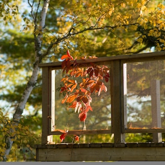 Herbstlaub neben einer plattform, see des holzes, ontario, kanada