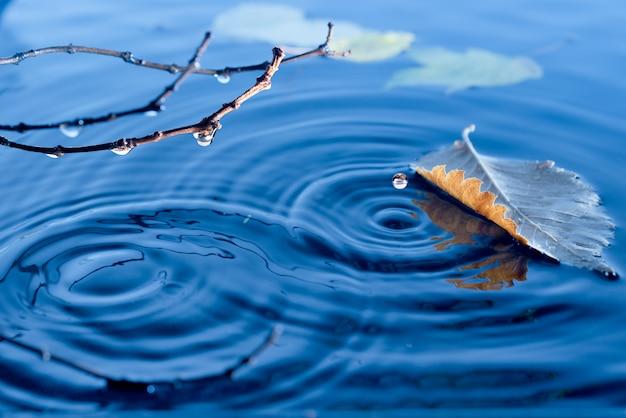 Herbstlaub schwimmt auf der wasseroberfläche