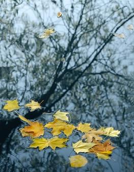 Herbstlaub- und baumreflexion im teichwasser