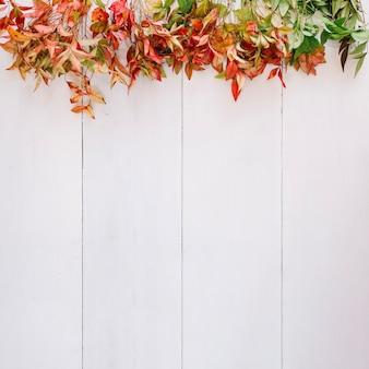 Herbstlaub und platz auf der unterseite