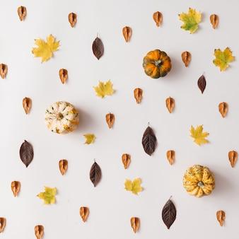 Herbstlaubmuster mit kürbissen auf weißer wand. flach liegen.