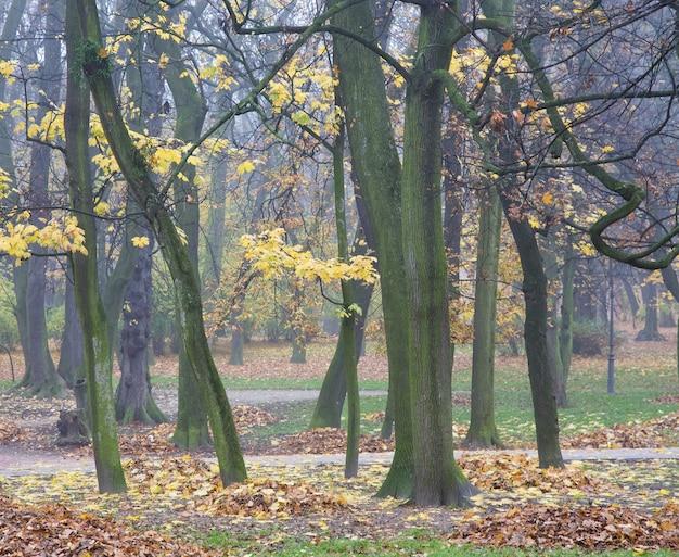 Herbstlaubreste, fußgängerweg und fallende blätter im stadtpark