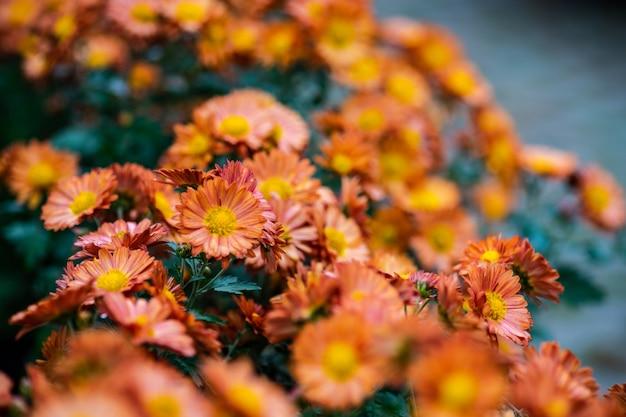 Herbstliche blumen hintergrund