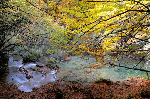Herbstliche buchen im naturschutzgebiet urederra riber. navarra. spanien