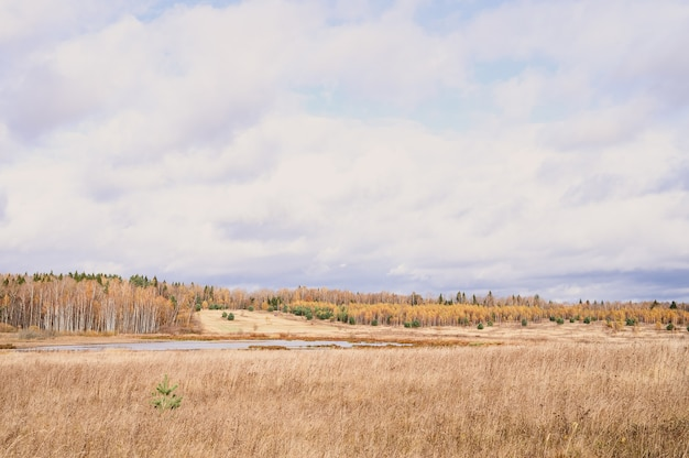 Herbstliche ebene landschaft. fall niedriger himmel mit wolken, bäume mit gelben fallenden blättern, ein teich und ein feld mit verdorrtem gras