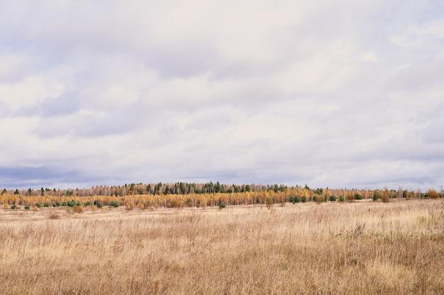 Herbstliche ebene landschaft. fall niedriger himmel mit wolken, bäume mit gelben fallenden blättern und ein feld mit verdorrtem gras
