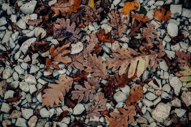 Herbstliche eichenblätter liegen auf den steinen.